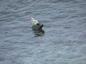Photo of a harbor seal peeking out of the water with a party hat digitally added to its head