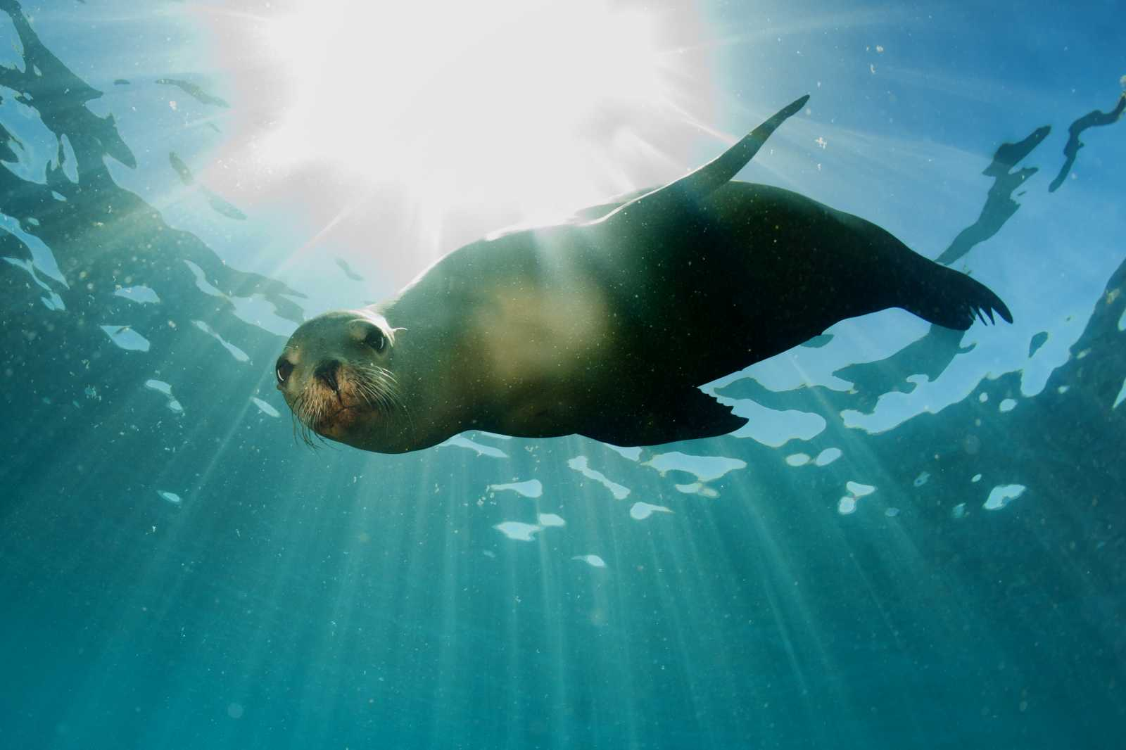 How to Help a Stranded Marine Mammal: